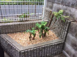 剪定後 植栽