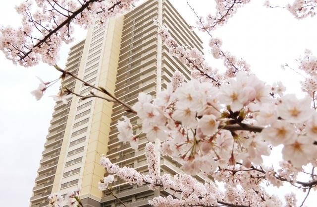 マンションと桜